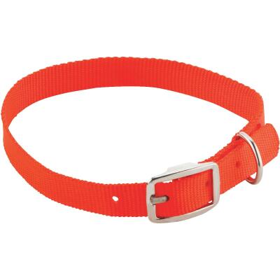 Westminster Pet Ruffin' it 24 In. Nylon Dog Collar